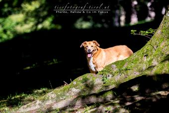 hundefoto3