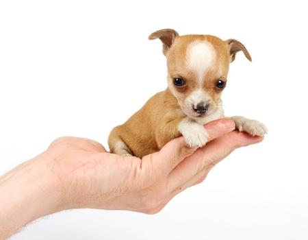 Cute Shih Tzu Puppies Wallpaper Kleine Hunderassen F 252 R Anf 228 Nger Und Familie Mini Hunderassen