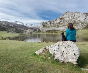subir a los lagos de covadonga con perro