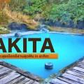 01akita