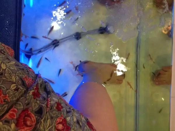 fish spa chiang mai