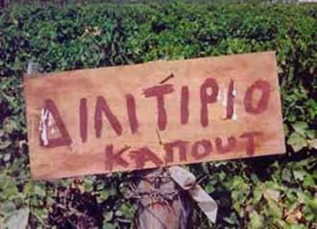 dilitirio-kapout