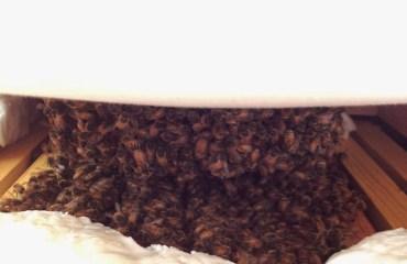 Tillys-Nest-winter-honeybee-cluster