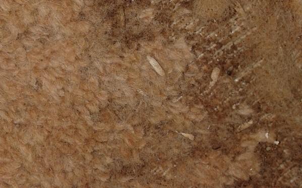 Carpet Beetle How To Get Rid Of Carpet Beetles Timberwise