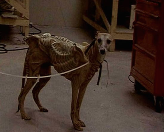 Whippet Dog As Xenomorph in Alien³