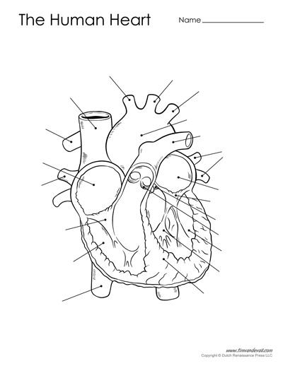 heart diagram blank