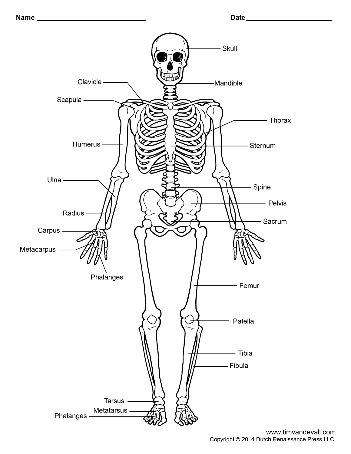 Body Bone Parts Name With Picture Diagram Human Body 4