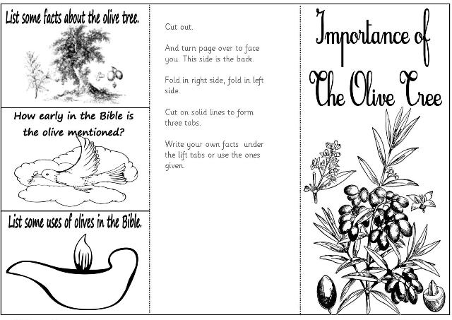 Valid Coloring Pages Olive Tree