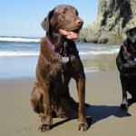 Happy pups on the beach.