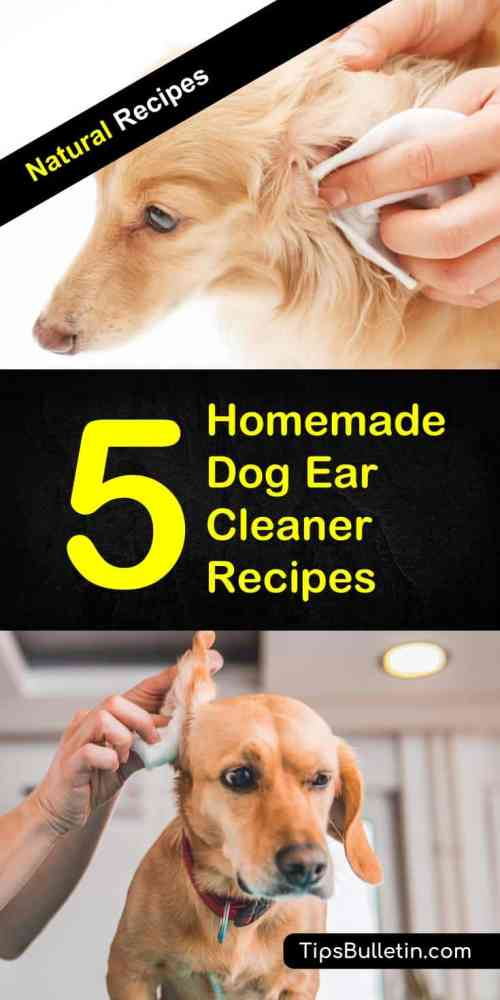 Medium Of Homemade Dog Ear Cleaner
