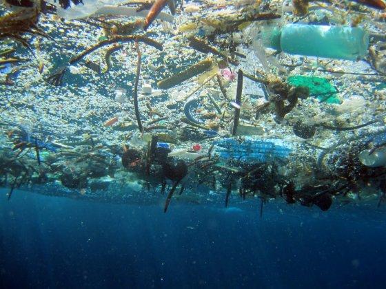 Inquinamento, Greenpeace: troppa plastica nei piatti: pesci e frutti di mare