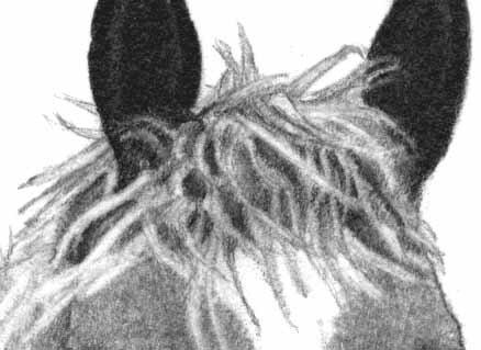 How to Draw a Horse - Part Two - Pic Six