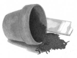 Flower Pot With Seed Packet