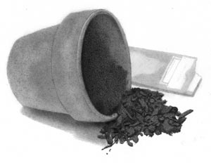 Flower Pot With Seed Packet With More Detail