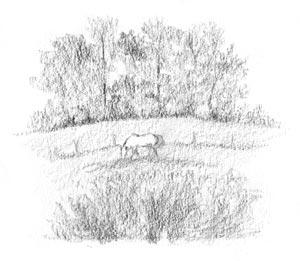 Horse In Field Sketch