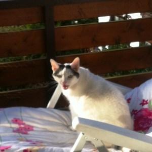 Pascha auf dem Balkon - erste Frühlingssonne Ostersamstag 2016