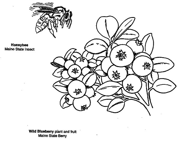 Blueberries For Sal Coloring Page - Costumepartyrun