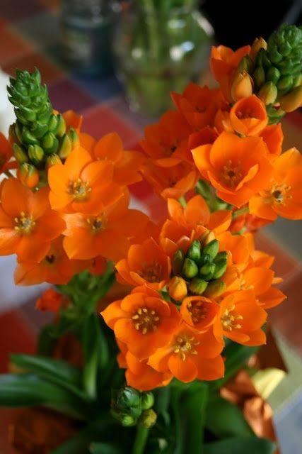 Gorgeous Fall Wallpaper Flores Mais Lindas E Raras Do Mundo Fotos Toda Atual