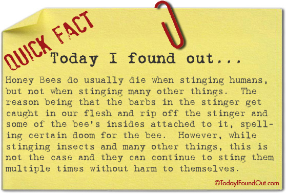 Honey Bees Don39t Usually Die When Stinging Things