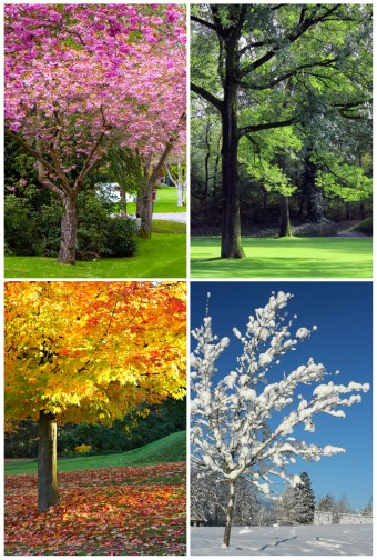 Why We Call the Seasons Summer, Autumn, Winter, and Spring - photo of spring