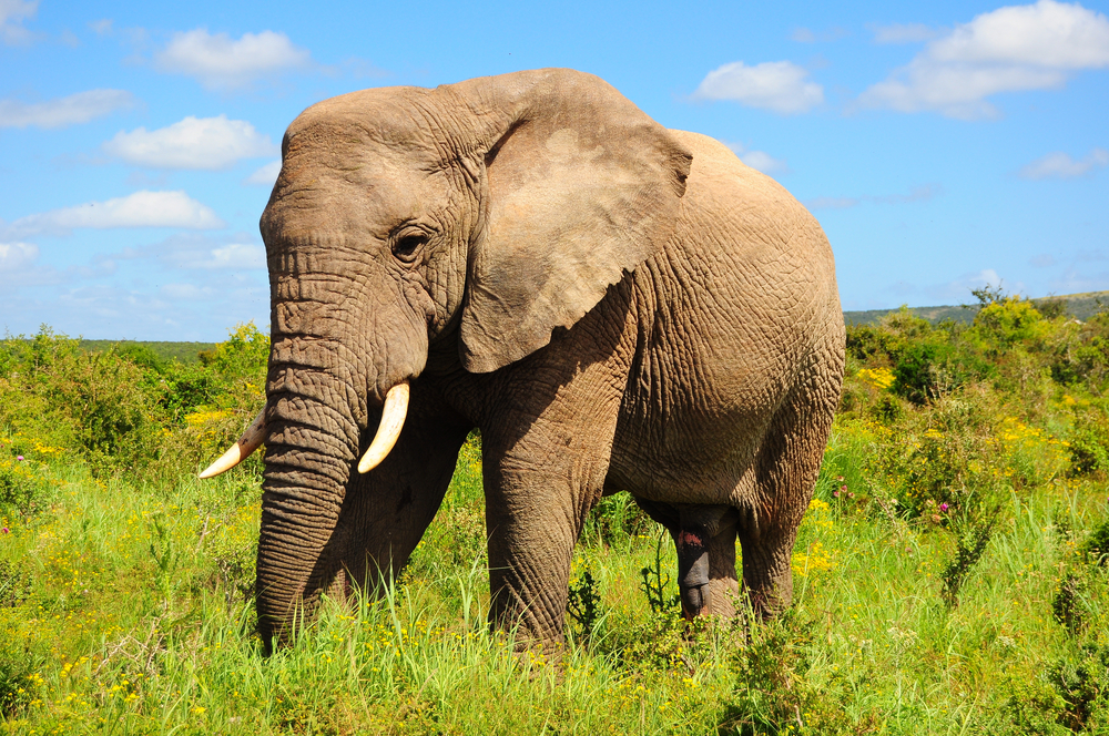 Cute Baby Ultra Hd Wallpapers The Skin Of An African Elephant