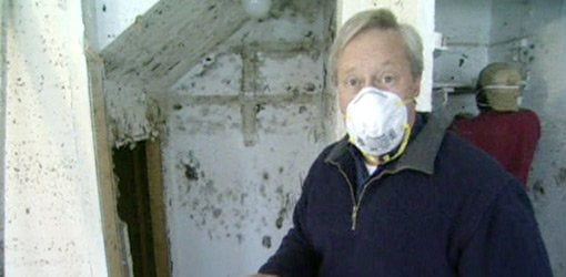Black Mold Under Wallpaper How To Prevent And Remove Mold In Your Home Today S