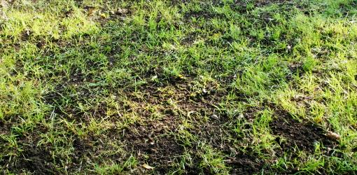 Black Mold Under Wallpaper Top Dressing To Improve The Soil In Your Lawn Today S