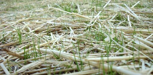 Benefits Of Spreading Straw Or Mulch Over Grass Seed | Today'S