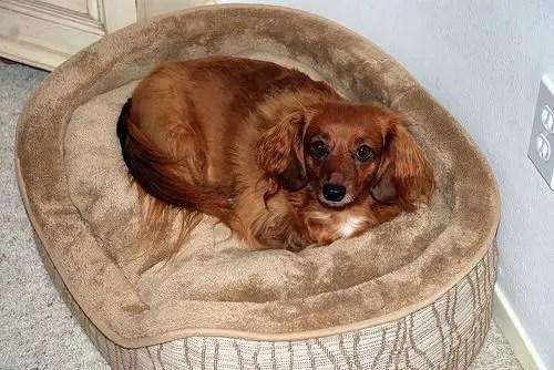 Como hacer una cama para perros todo manualidades - Como hacer camitas para perros ...