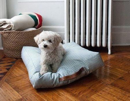 Como hacer almohadones para perros todo manualidades - Como hacer almohadones ...