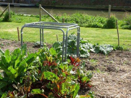 consejos para cuidar las plantas