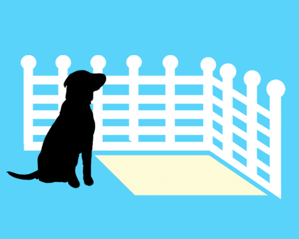 easy steps to potty train your puppy