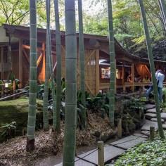 報国寺(Hokokuji)竹寺