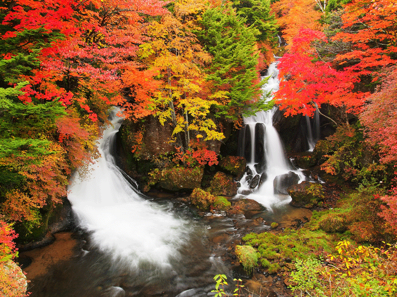 Japan Fall Colors Wallpaper Autumn S Coat Of Many Colors A Short Guide To Fall