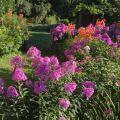 Susan's flower garden.