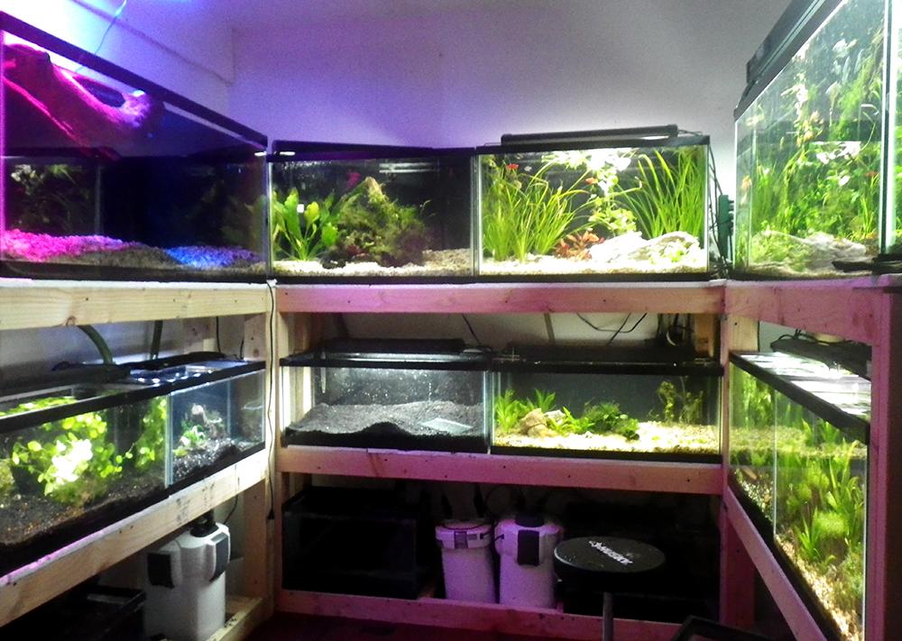 Tom s tanks the new fish room