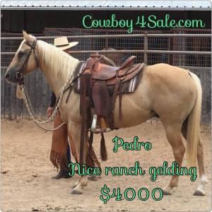 Scooby - www.Cowboy4Sale.com