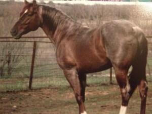 Pepto Madera - standing Stud $600 #stud #horse #horses #peptoboonsmal #cowboy4sale www.Cowboy4Sale.com