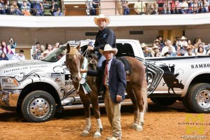 Woodrow - mustang from Mustang Million - for sale