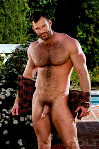 hairy muscle daddy men