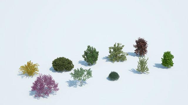 varietà plantskit8 Laubwerk