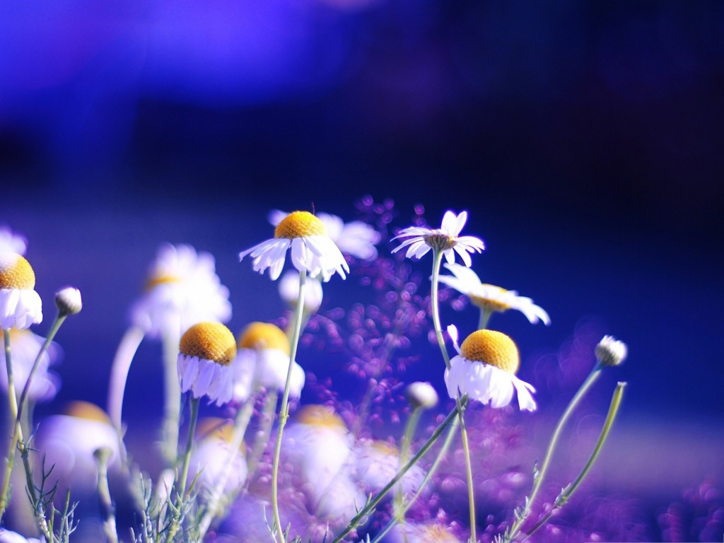 Violet Flower Hd Wallpaper These Small Flowers Are Insanely Beautiful 50 Photos