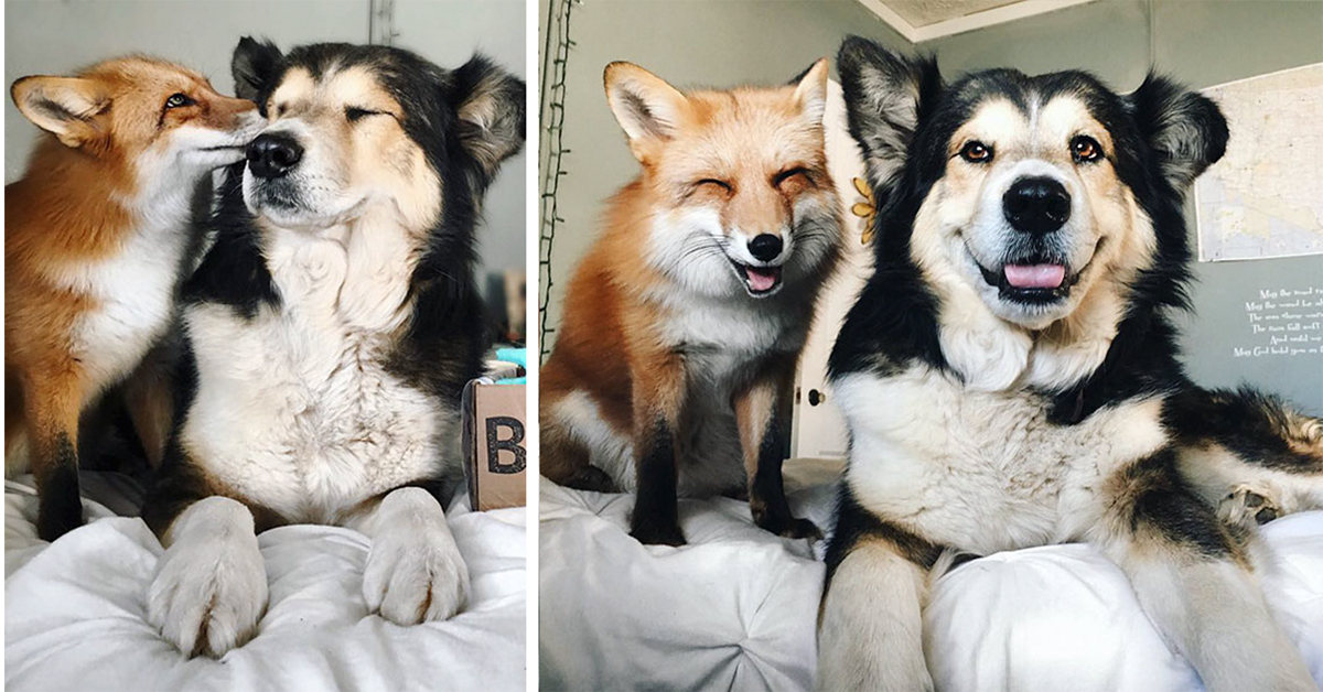 Super Cute Baby Cats Wallpaper Rescue Pet Fox And Dog Become Best Friends Top13