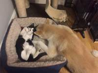 16 Cats That Stole Dog Beds And Didnt Have A Care In The ...