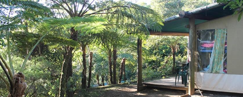 Binna-Burra-Lodge-Rainforest-Campsite
