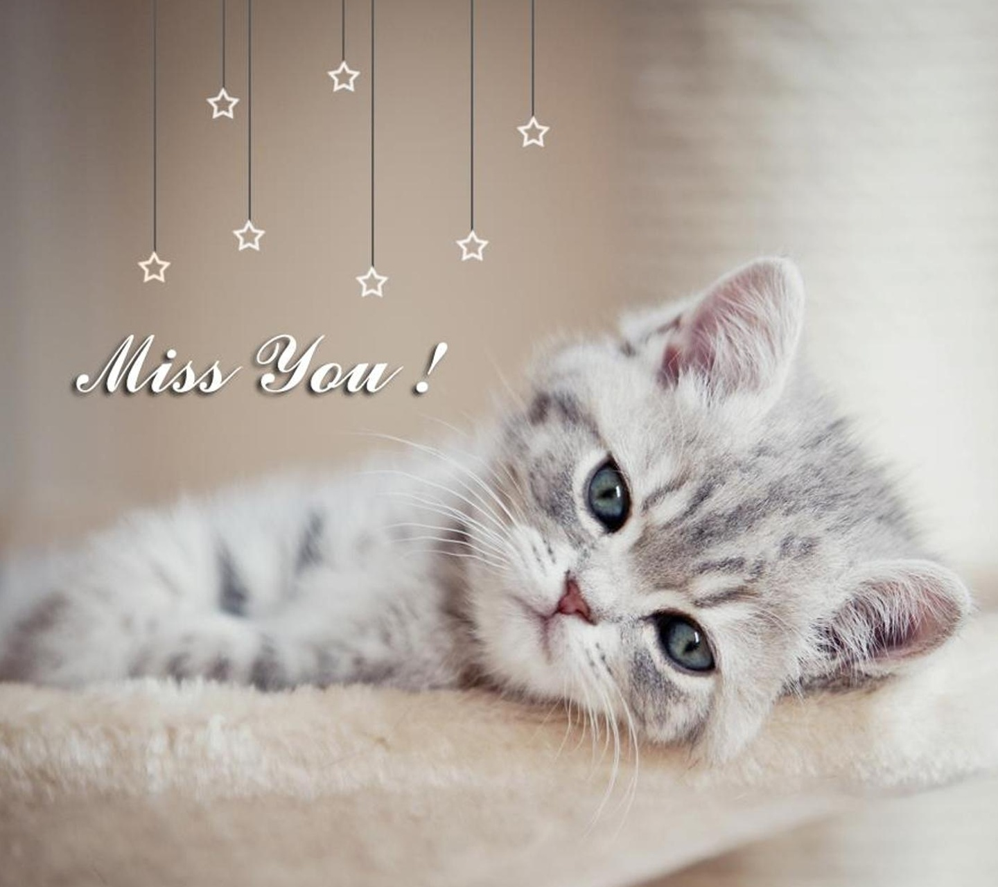 Sad Love Quotes For Him Wallpaper Cute Kittens And Funny Cats Photos Topbestpics Com