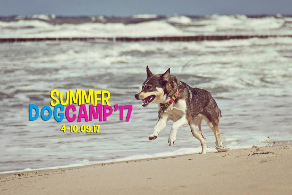 Summer Dog Camp 2017