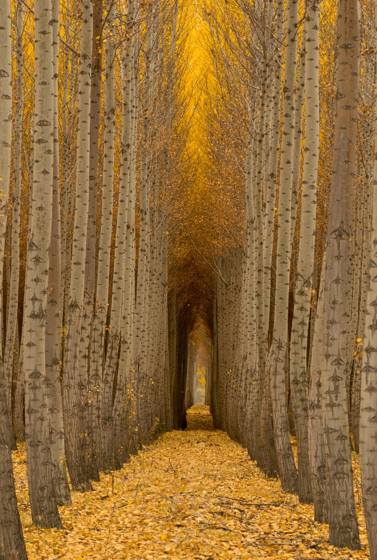 Beautiful Fall Paintings Wallpapers Top 10 Fascinating Tree Tunnels Across The World Top