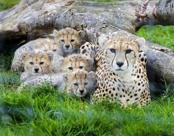 Top 10 Baby Animals From Zoos of the World2