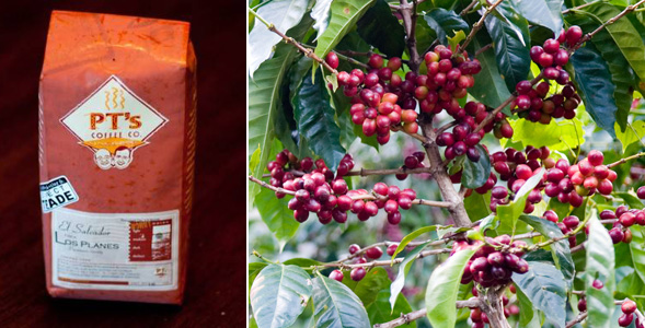 Top 10 Most Expensive Coffee